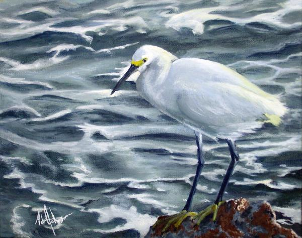 Adam Johnson - Snowy Egret on Jetty Rock