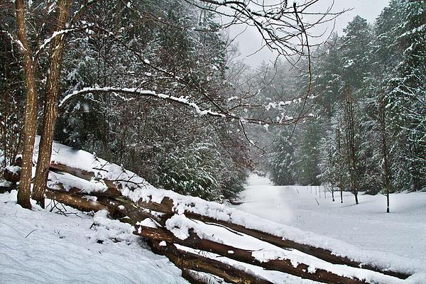 Snowy Fence Print by Debra and Dave Vanderlaan