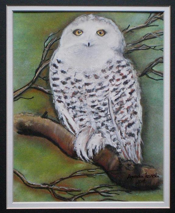 Snowy Owl Print by Agnieszka Jezierska-Drutel