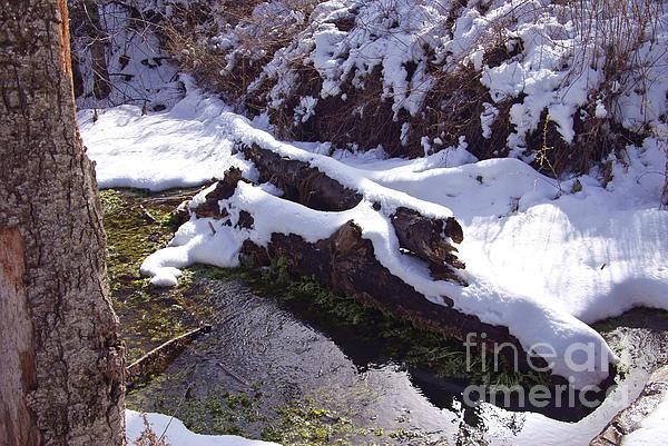 Snowy Stream Print by Virginia Hagerty