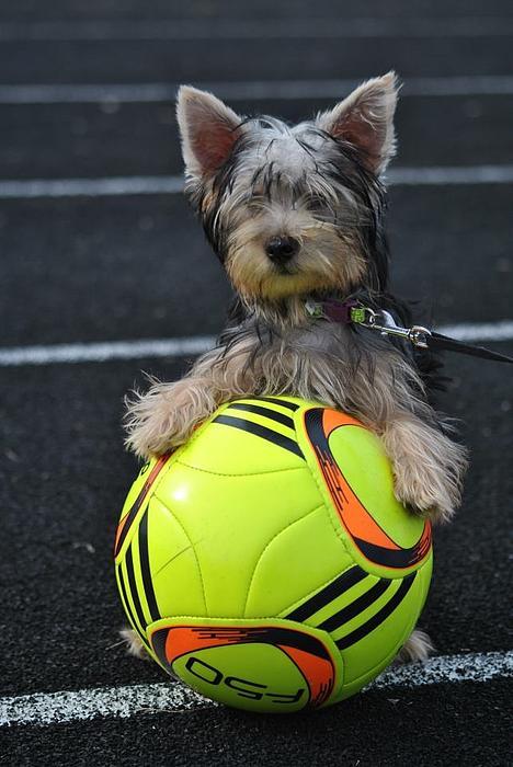 Soccer Dog Print by Dawn Moreland
