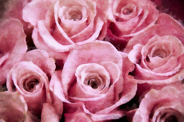 Soft Pink Roses Photograph
