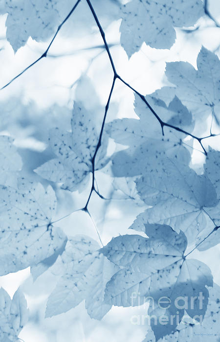 Softness Of Blue Leaves Print by Jennie Marie Schell