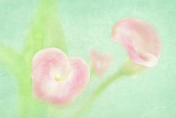 Cheryl Davis - Softness Of Spring