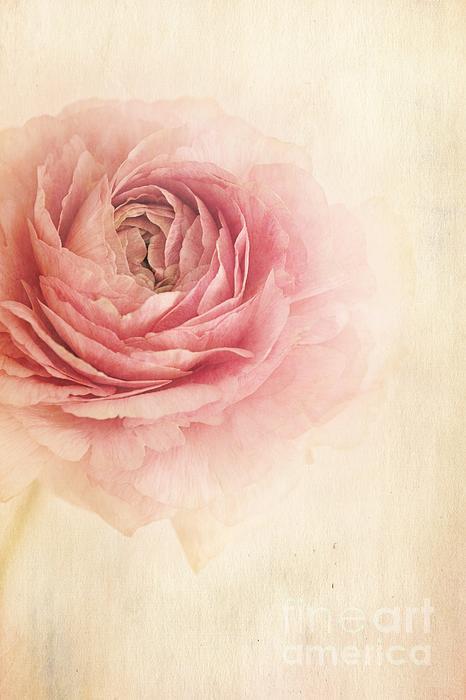 Sogno Romantico Print by Priska Wettstein