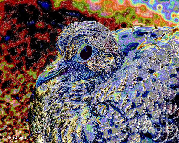 Solar Dove Print by Tam Ishmael - Eizman