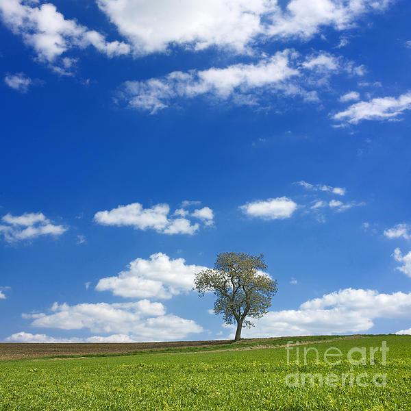 Solitary Tree In Green Meadow Print by Bernard Jaubert