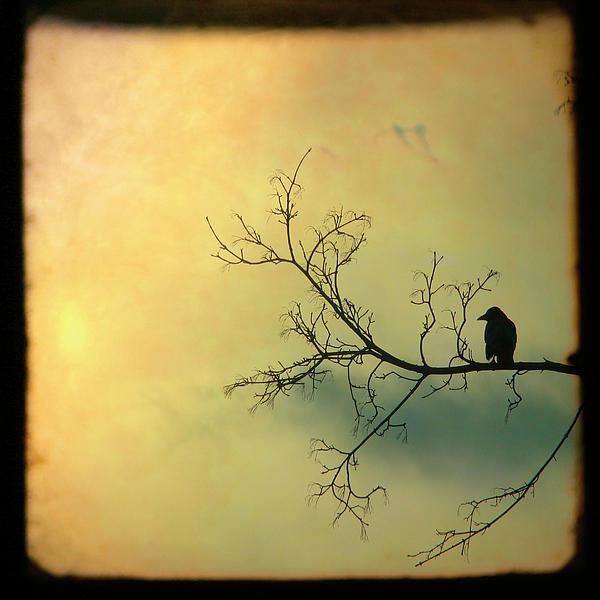 Gothicolors Donna Snyder - Solitude Mood