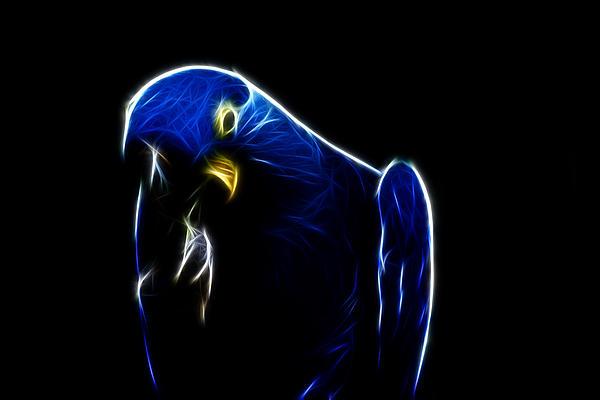 Douglas Barnard - Somewhat Blue