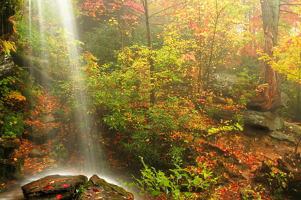 Sounds Of Autumn Print by Darren Fisher