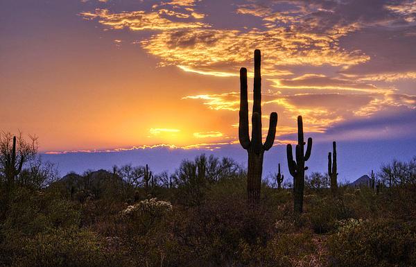 Saija  Lehtonen - Southwest Desert Sunset