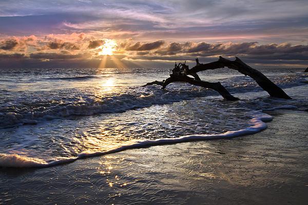 Sparkly Water At Driftwood Beach Print by Debra and Dave Vanderlaan