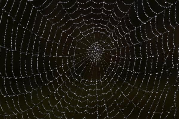 Spider Cobweb by Cliff Norton: fineartamerica.com/featured/spider-cobweb-cliff-norton.html