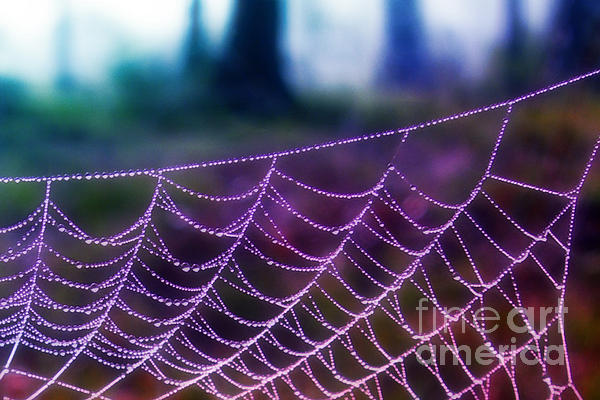 Judi Bagwell - Spider Web at Dawn