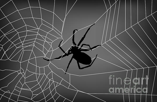 Spider Web With Spider Digital Art