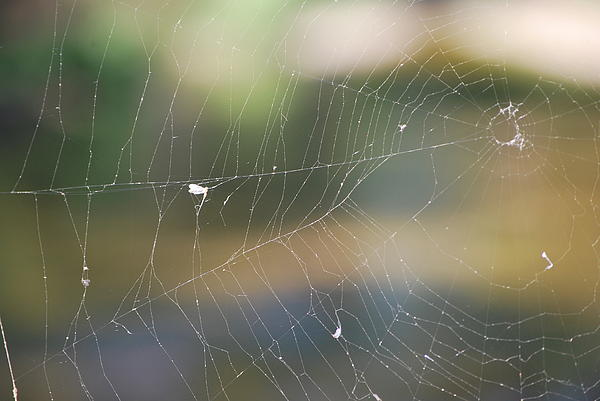 Spiderweb Print by Michele Carter