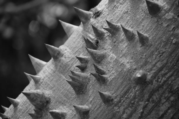 Spikey Thorny Tree Print by Rob Hans
