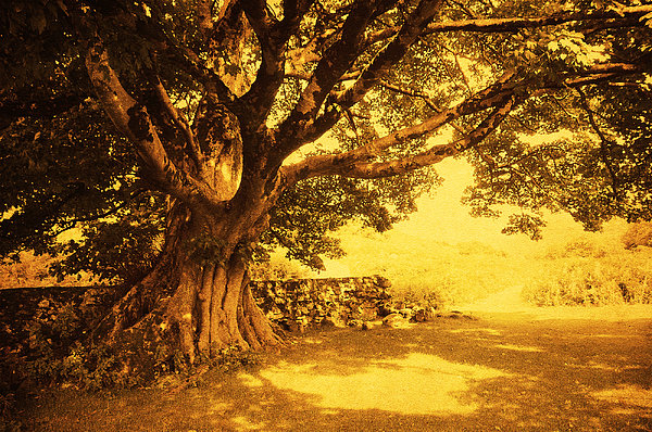 Spiritual Place. Wicklow Mountains. Ireland Print by Jenny Rainbow