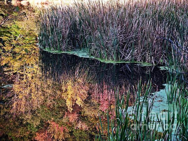 Splendor In The Grass Print by Christian Mattison