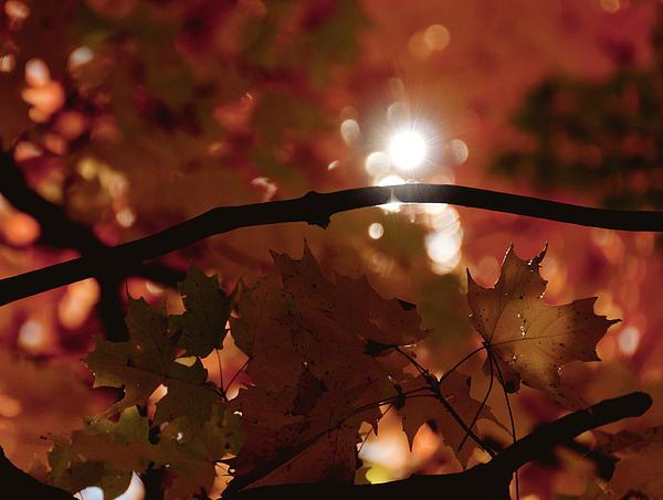 Spotlight On Fall Print by Cheryl Baxter