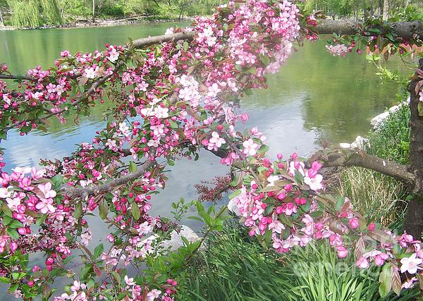 Deborah Cummins - Spring