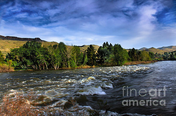 Spring Flow Print by Robert Bales