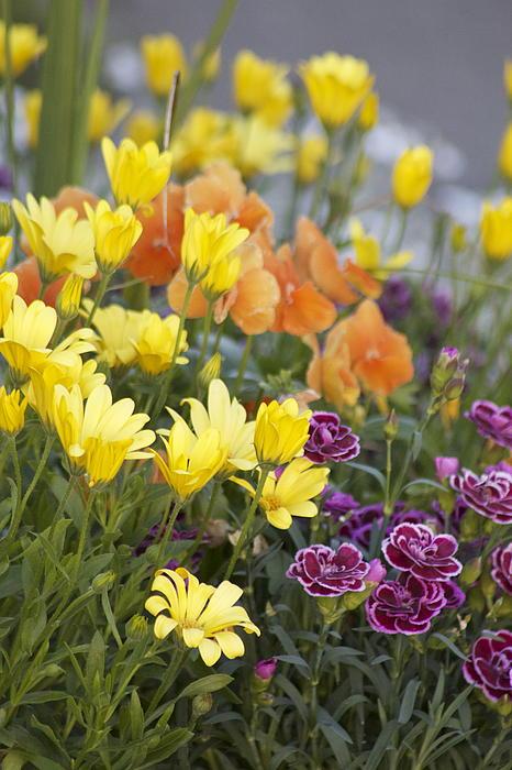 Sylvia Hart - Spring  Garden