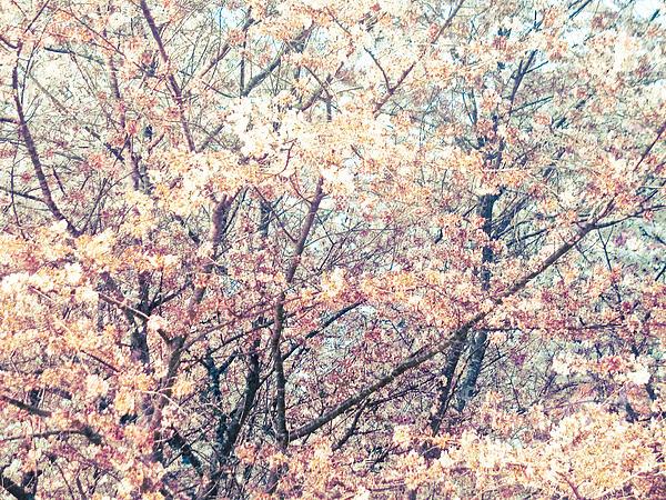 Spring Impressions Print by Mira Dimitrijevic