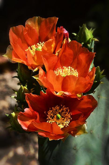 Saija  Lehtonen - Spring into Red