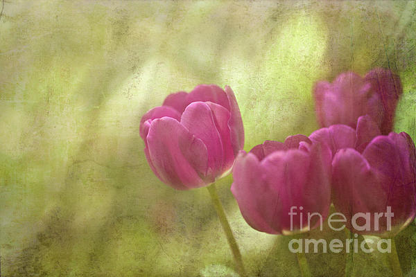 Spring Is In The Air Print by Reflective Moments  Photography and Digital Art Images