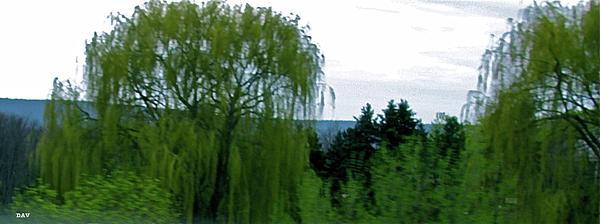 Spring Landscape Willows Print by Debra     Vatalaro