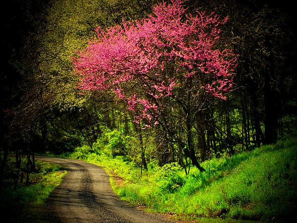 Spring Mountain Road Print by Michael L Kimble