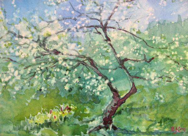 Spring Plum Print by Elizabeth Carr