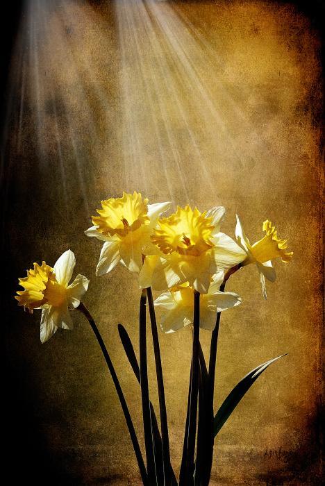 Spring Sun Print by Lois Bryan