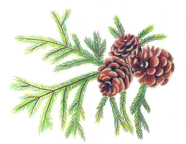christmas pine cone drawing - photo #22