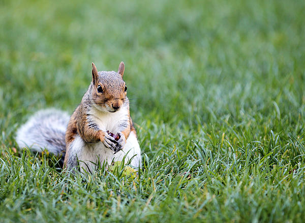 Paul Fell - Squirrel