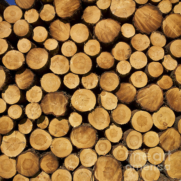 Stack Of Wood Logs. Print by Bernard Jaubert