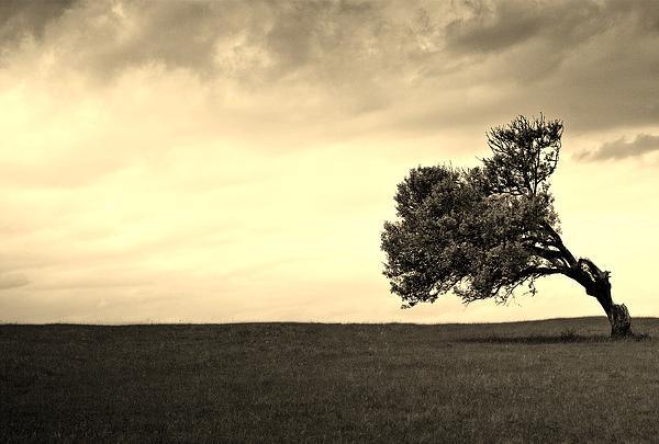 Stand Alone Tree 1 Print by Sumit Mehndiratta