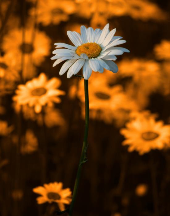 Linda McRae - Standing Alone
