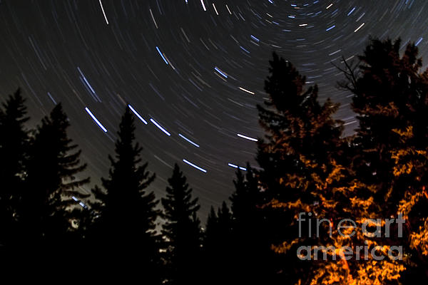 Star Trails Above Spruce Tree Line Print by Darcy Michaelchuk
