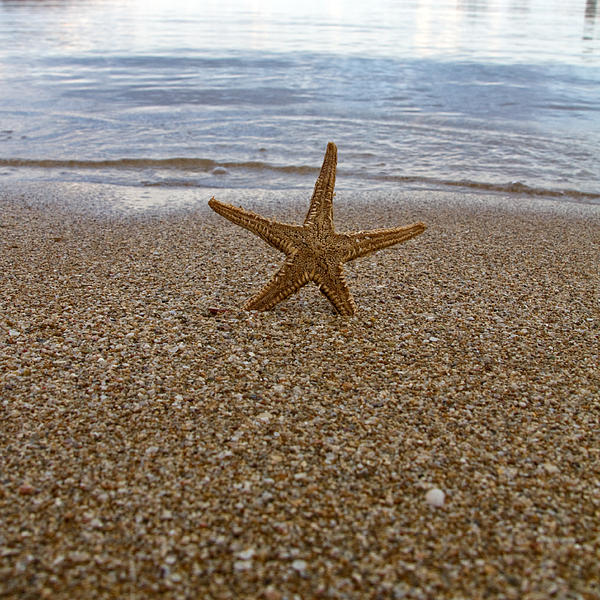 Starfish Print by Stylianos Kleanthous