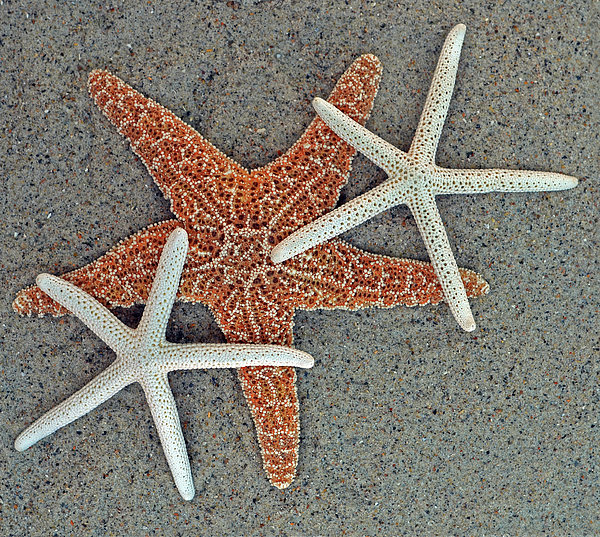 Sandi OReilly - Starfish Three