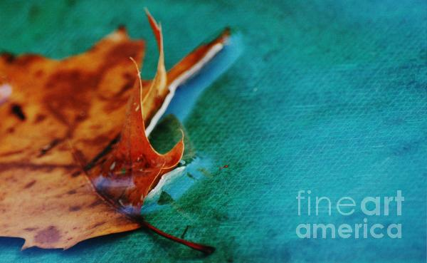 Still Beauty Photograph  - Still Beauty Fine Art Print