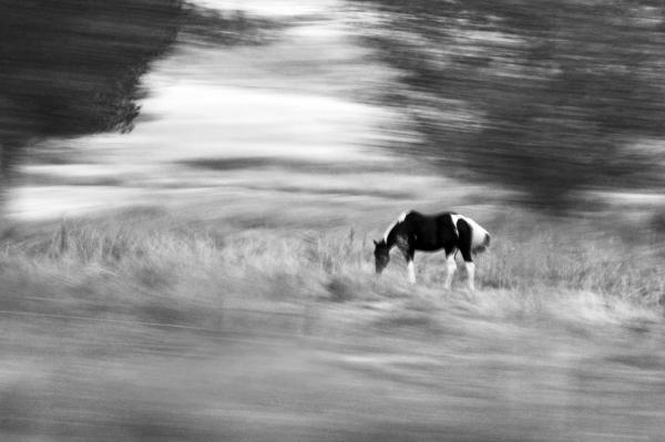 Still But In Motion Photograph  - Still But In Motion Fine Art Print