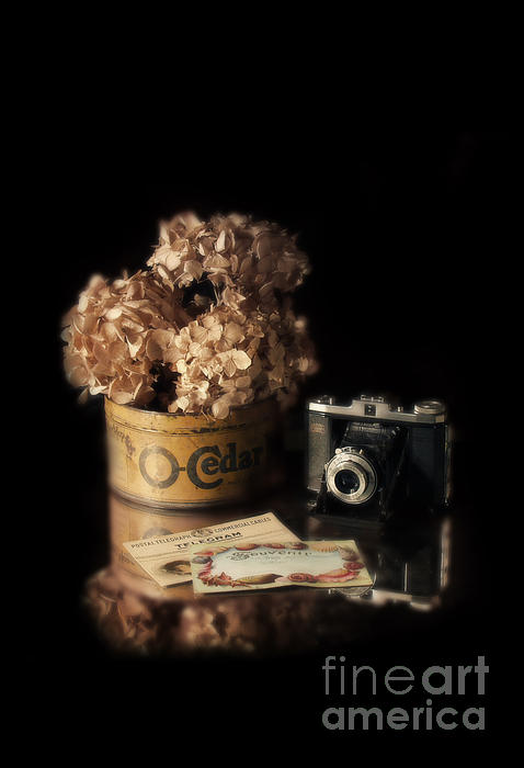 Jill Battaglia - Still Life with Hydrangea and Camera