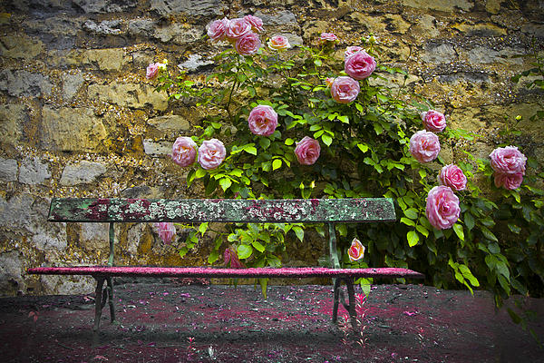 Stop And Smell The Roses Print by Debra and Dave Vanderlaan
