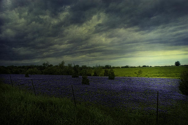 Sue Fulton - Storm over Bluebonnets Easter Sunday