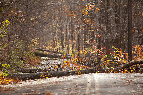 Stormy Autumn Print by Karol  Livote