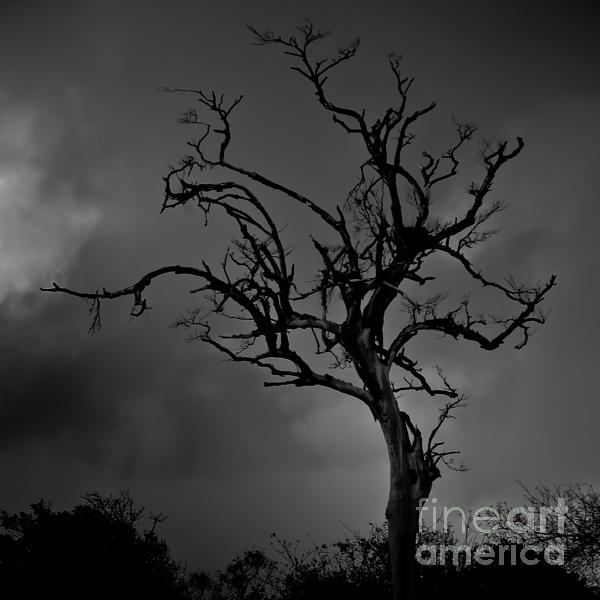 Stormy Tree Print by Kevin Barske