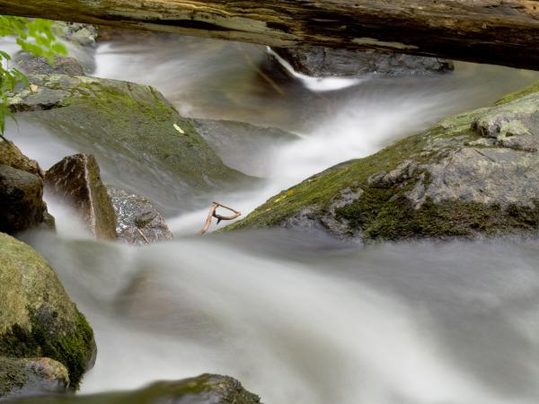 Stream In Motion Print by Jim DeLillo